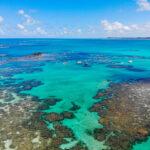 WSL escolhe SOS Mata Atlântica como uma das ONGs beneficiadas da WSL PURE